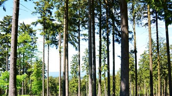 Trockenheit und mangelnder Regen führen zu verstärkter Waldbrandgefahr!