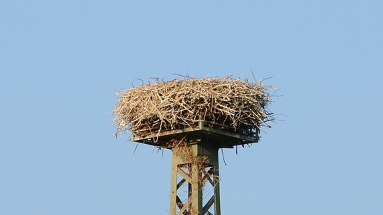 Das Storchennest in Bingen-Gaulsheim ist nun häufig verlassen, da die gesamte Störchenfamilie tagsüber unterwegs auf Nahrungssuche ist.