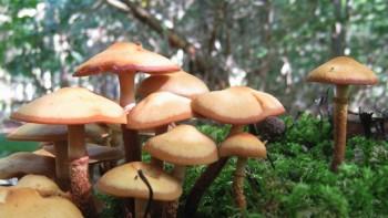 Pilze sind wichtig das Ökosystem Wald, denn sie zersetzen beispielsweise abgestorbene Pflanzen und Totholz und versorgen den Waldboden mit wertvollem Humus.